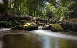 Rauscher Park Wasser